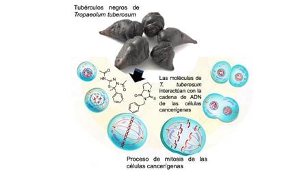 enterobioza rospotrebnadzor enterobius vermicularis en perros